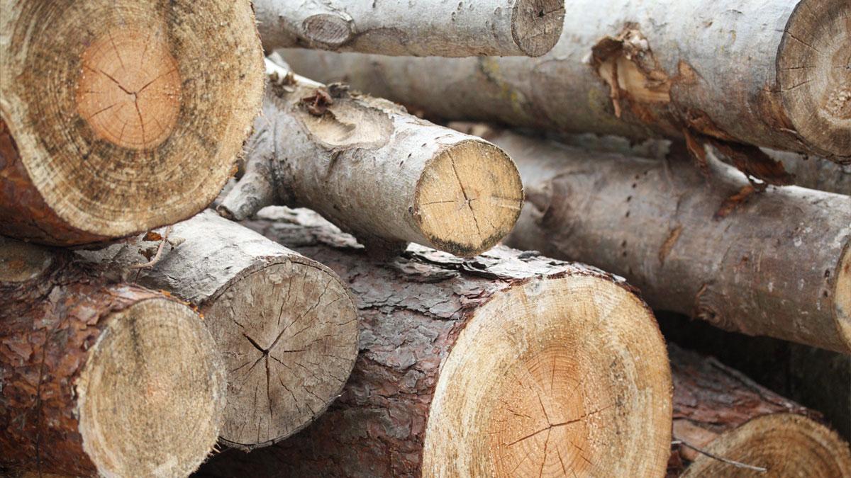 Birling-Estate-english-timber-milled-3